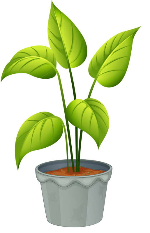 Bushes clipart paint. Green home plant my