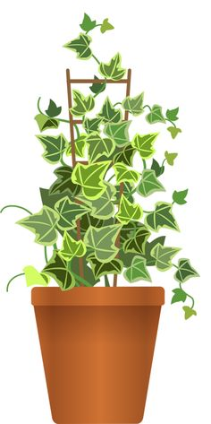 Plants leave free on. Bushes clipart potted