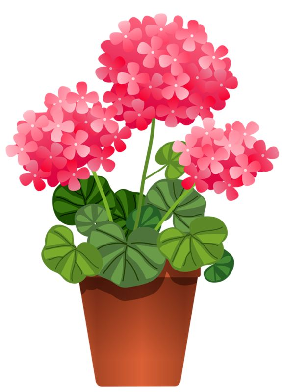bushes clipart potted
