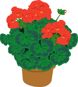 Bushes clipart potted. Geranium in pot clip
