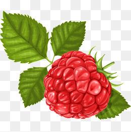 Bushes clipart raspberry. Berry fruit png vectors