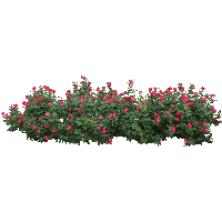 Bushes clipart raspberry. Download bush free png