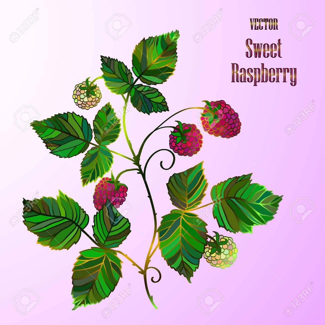 Free bush download clip. Bushes clipart raspberry