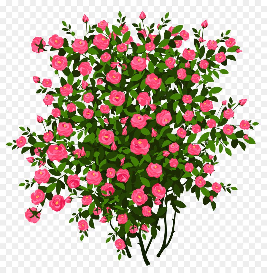 Bush clipart transparent flower. Rose shrub drawing clip