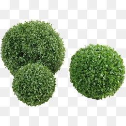 Shrubs png vectors psd. Bush clipart shrubbery
