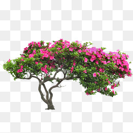 Shrubs png images vectors. Bushes clipart shrubbery