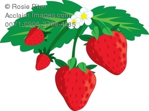 Strawberries clipart strawberry plant. Plants free on dumielauxepices