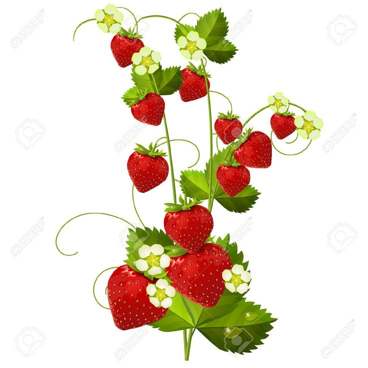 best my tattoos. Bushes clipart strawberry