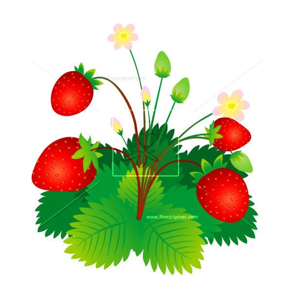 Plant free vectors illustrations. Bushes clipart strawberry