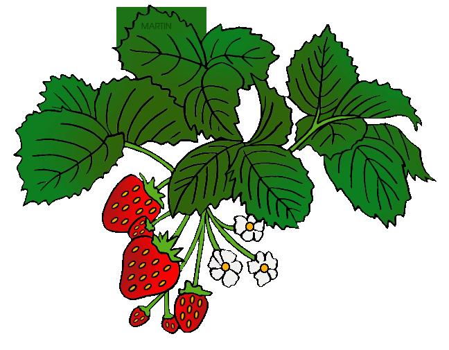 Strawberries clipart bush. Fruit clip art by