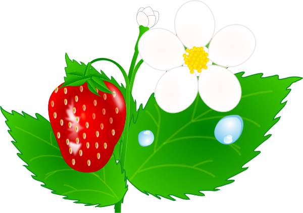 Flower jh clip art. Bushes clipart strawberry