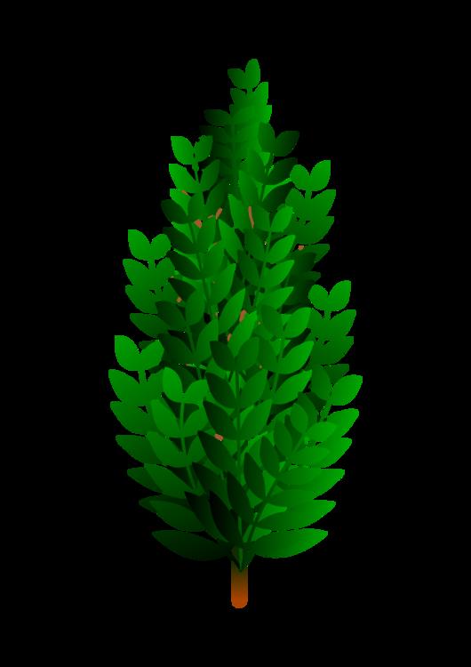 Bushes clipart svg. Fir pine family plant
