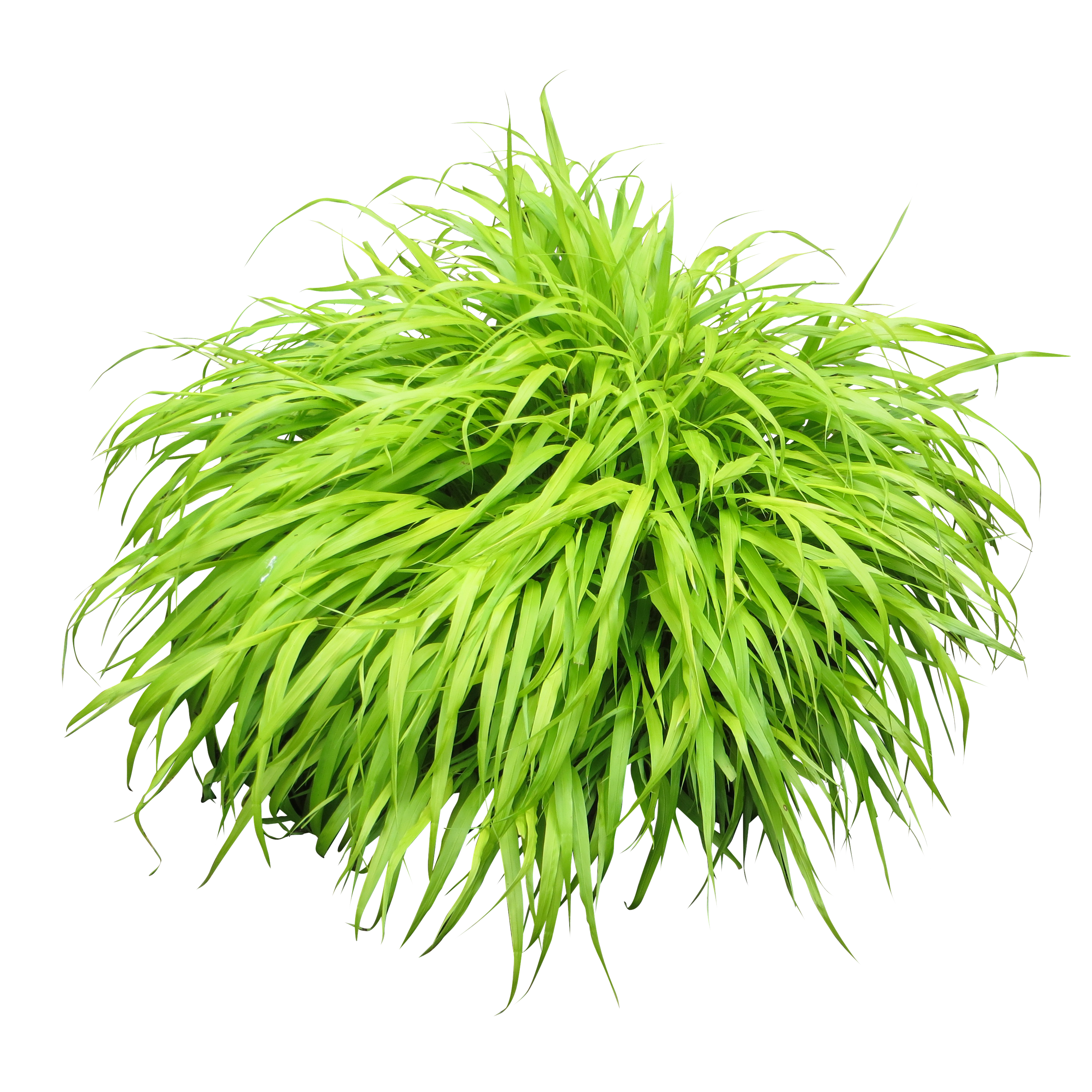 Clipart grass shrub. Bushes png images free