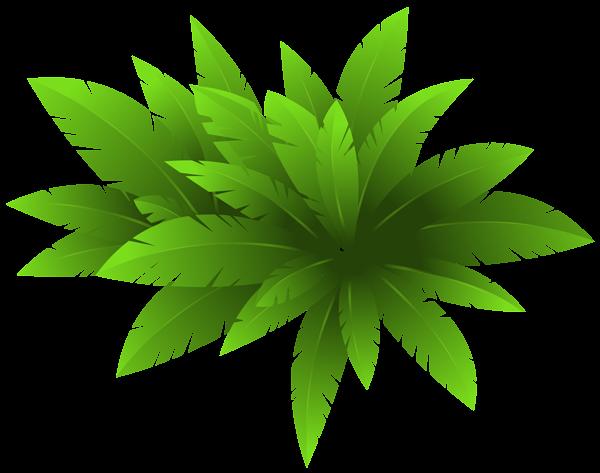 Green plant decoration png. Bushes clipart transparent background
