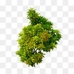 Shrub flower plant clip. Bushes clipart tree