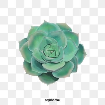Succulent plants png psd. Bushes clipart vector
