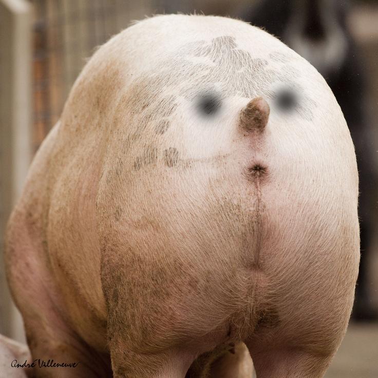 Butt clipart face. On a pig my