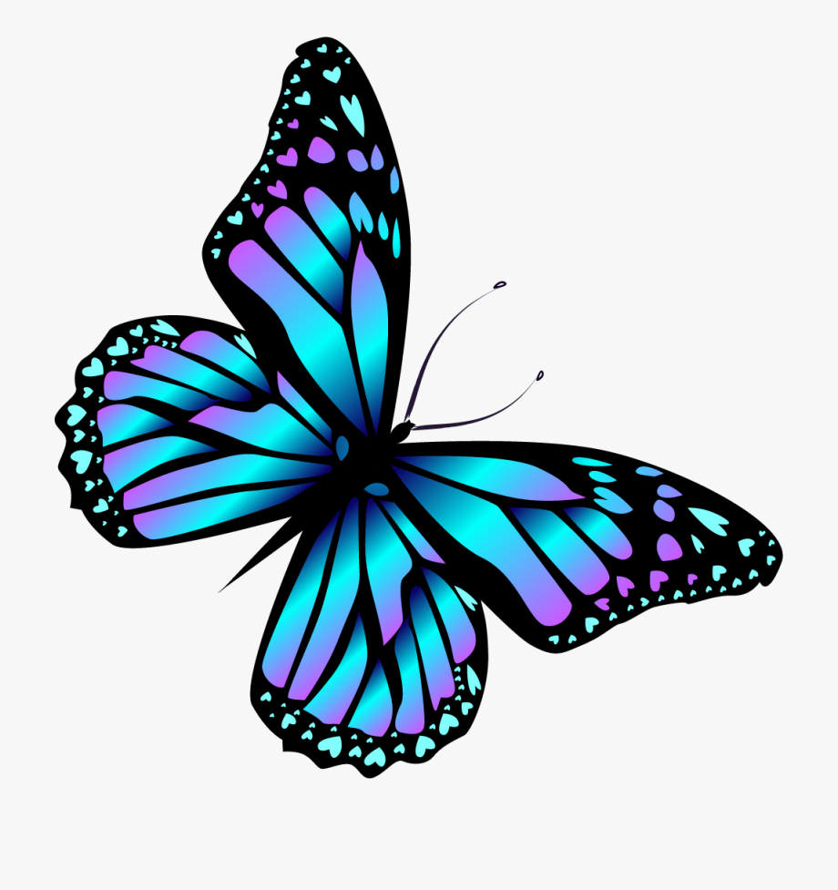 Clipart butterfly. Oranges png free