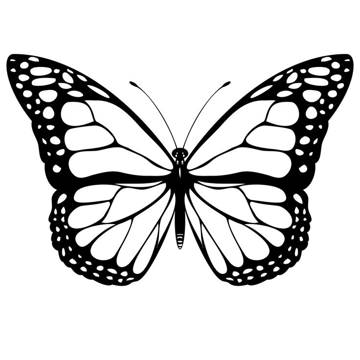 Butterfly clipart black and white. Free images download clip