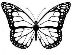 Butterfly google search smart. Butterflies clipart black and white