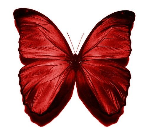 best vlinders images. Butterfly clipart burgundy