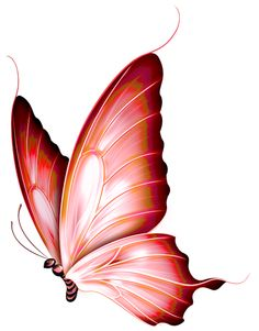 Butterfly clipart burgundy. By kayne stock on