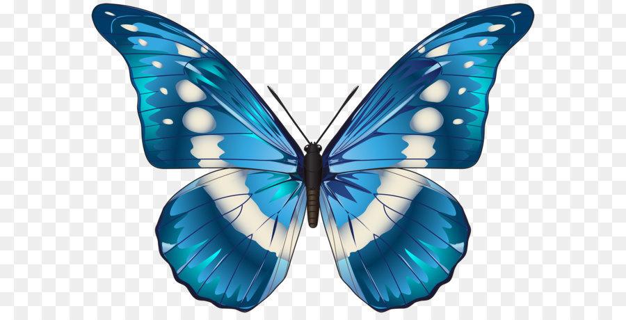 Butterfly clipart dark blue. Morpho menelaus clip art