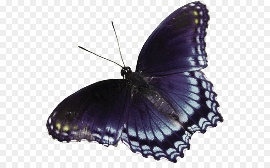 Butterfly clipart dark blue. Clip art cartoon black