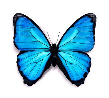 How to draw butterflies. Butterfly clipart dark blue
