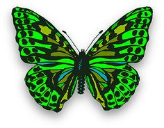 Red images yahoo search. Butterfly clipart light green