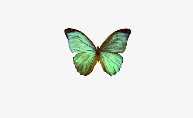 Butterfly clipart light green. Blue mint fly png