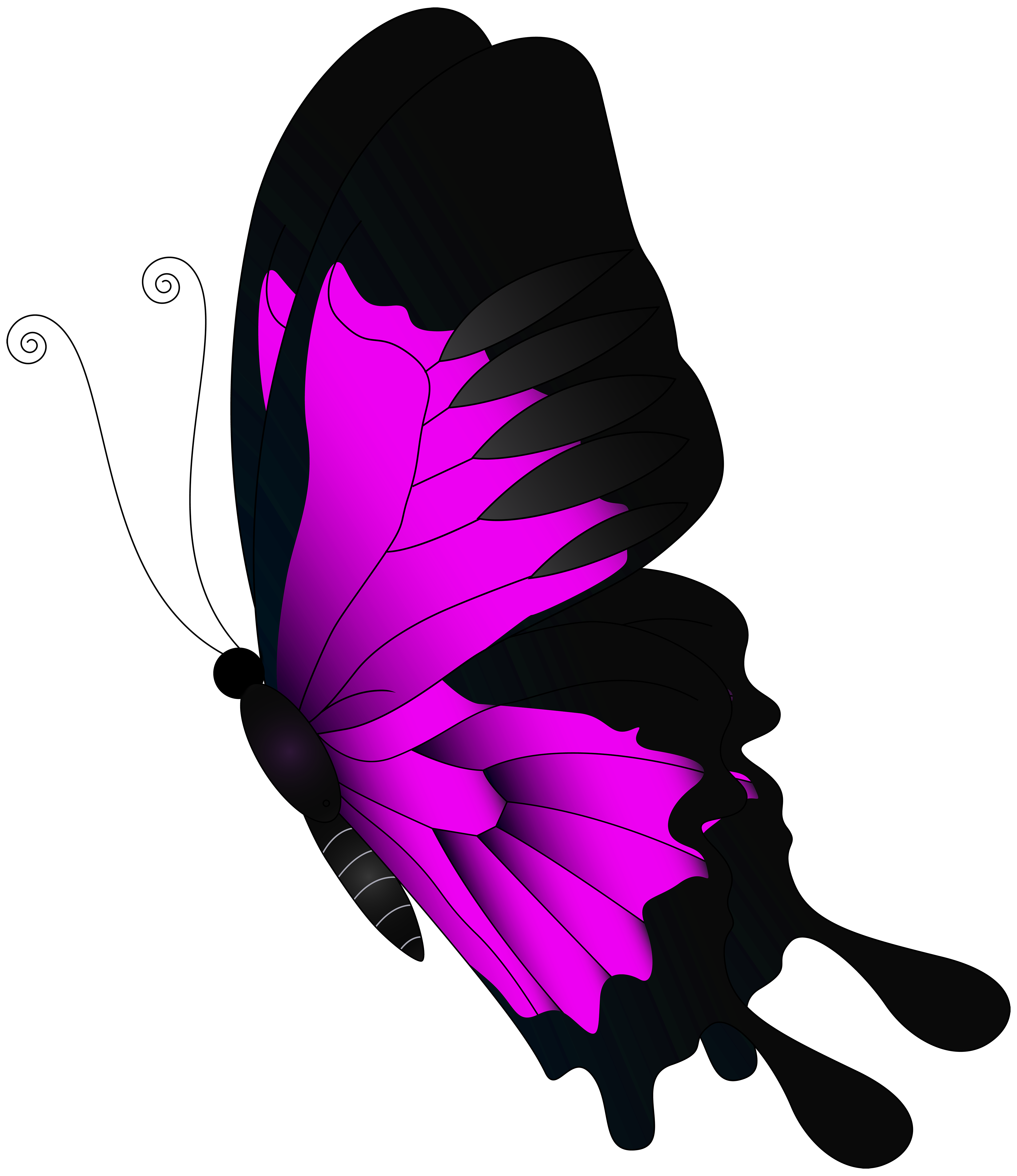 Pink flying butterfly png. Fly clipart insect wing