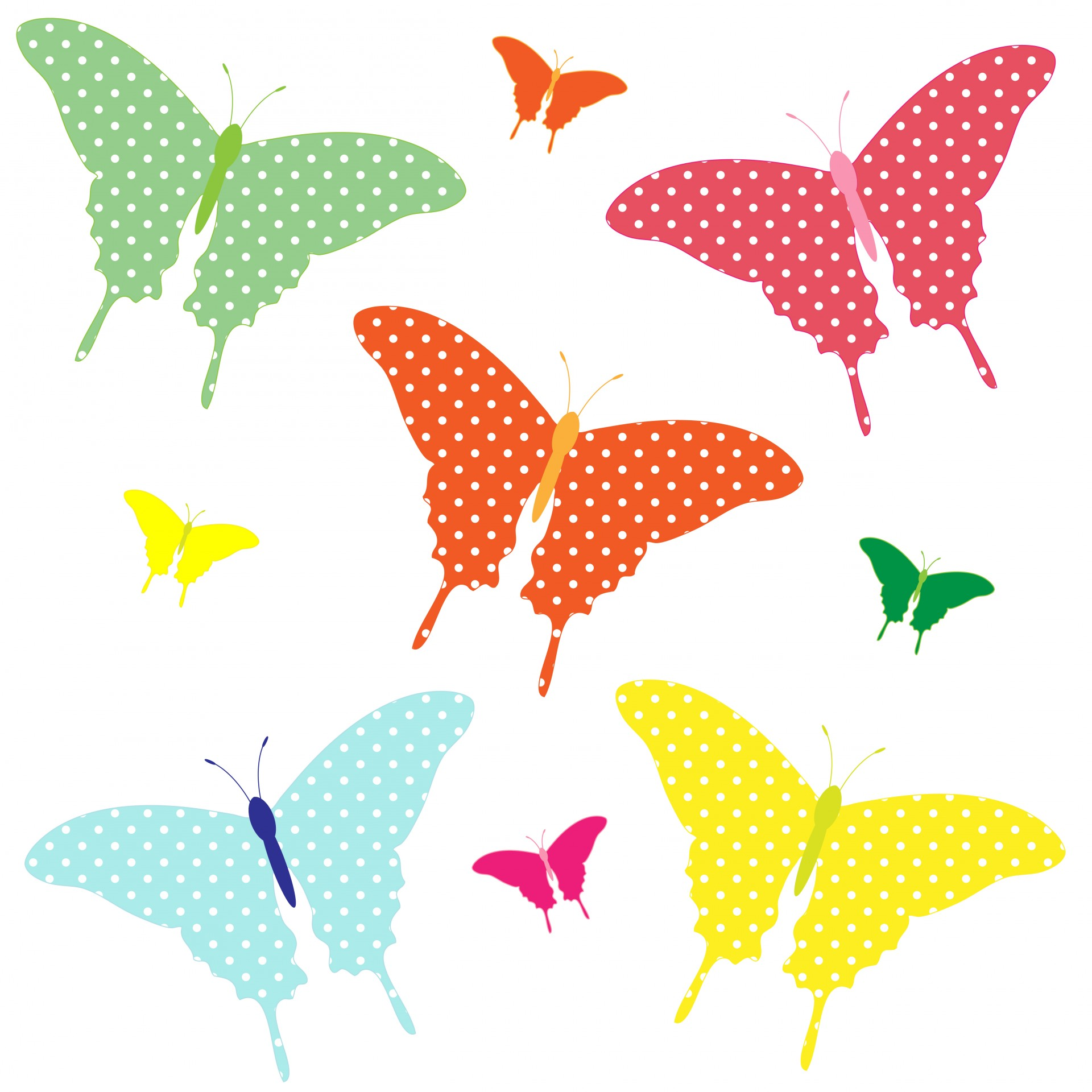 Butterflies clipart polka dot. Colorful free stock photo