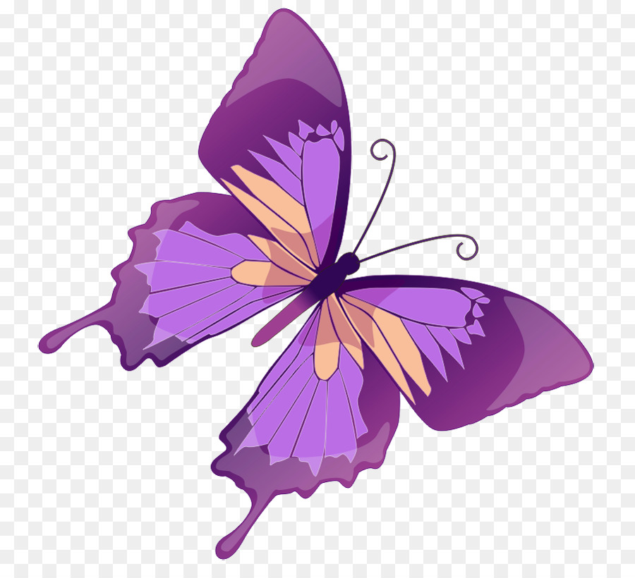Free content color clip. Butterfly clipart purple