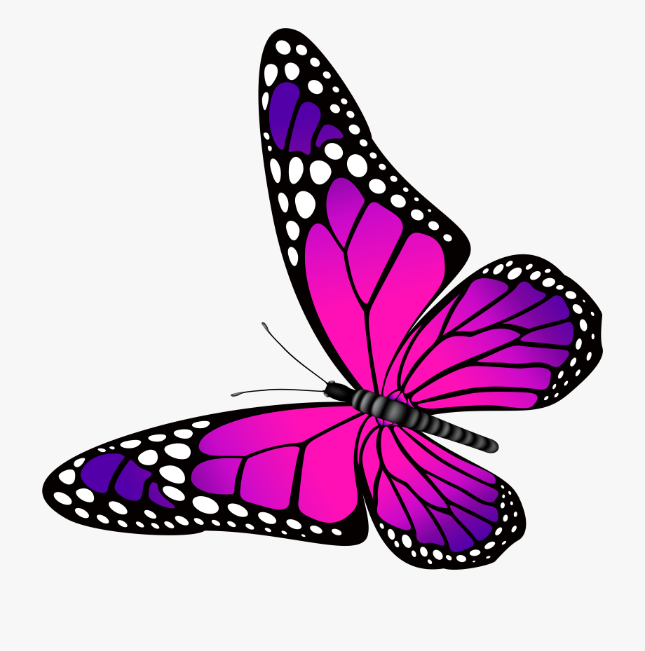 Pink and clip art. Butterfly clipart purple