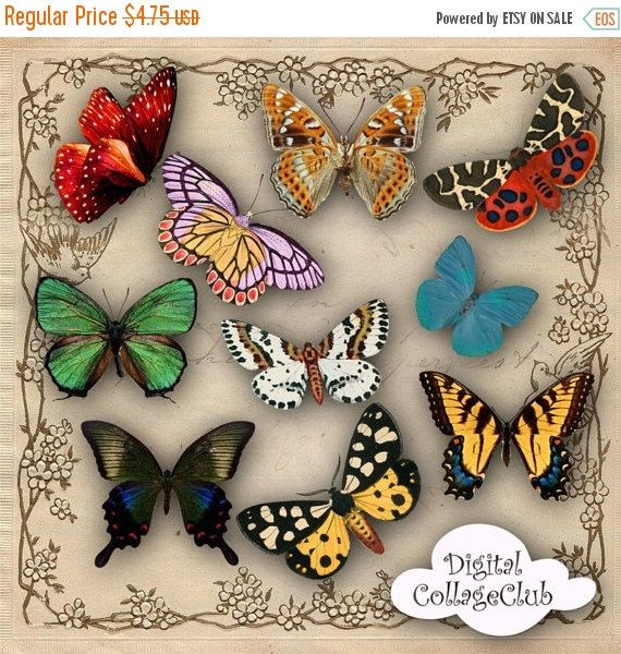 Butterfly clipart shabby chic.  off sale vintage