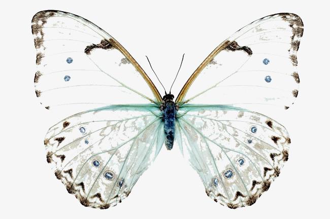 Butterfly clipart translucent. Butterflies flower png image