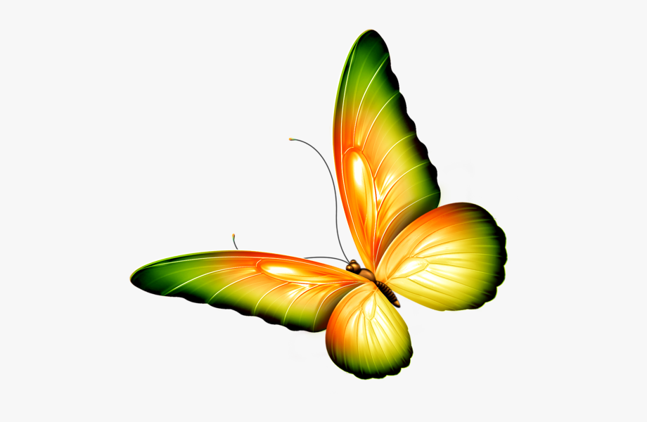 Clipart butterfly transparent background. Png yellow and green