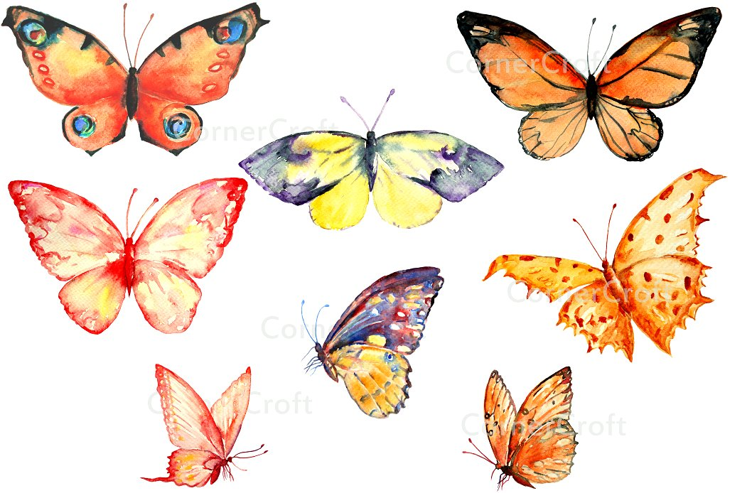 Butterfly clipart watercolor. Orange illustrations creative market