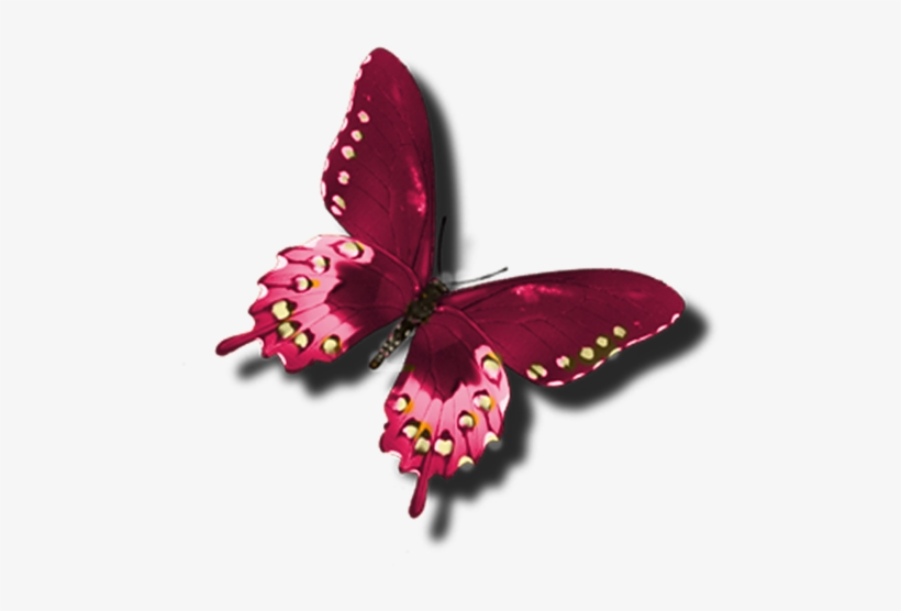 Clip art red beautiful. Clipart butterfly burgundy