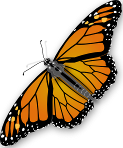 butterfly clipart clear background