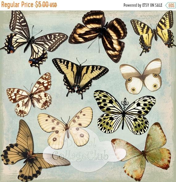 Butterfly clipart shabby chic.  off summer sale