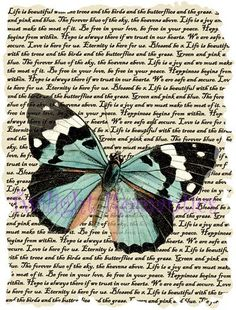 Pink and blue butterflies. Butterfly clipart shabby chic
