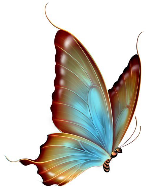 Butterfly clipart translucent.  best butterflies images