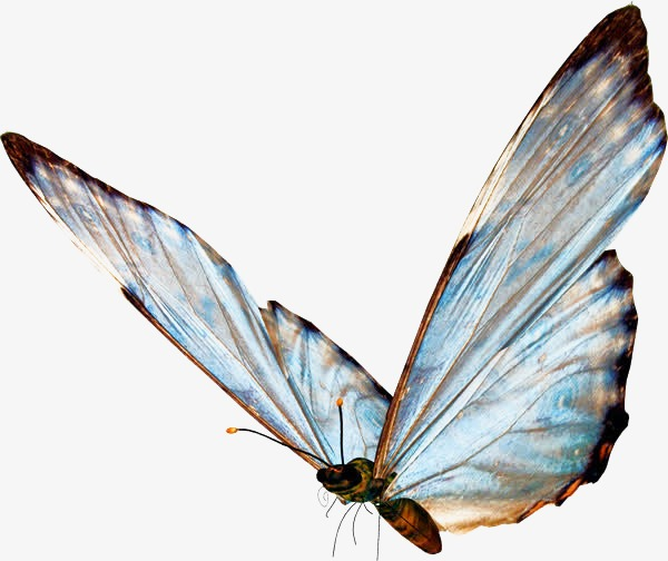 Butterfly clipart translucent. Blue png image and