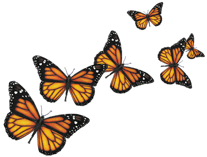 Transparent pictures free icons. Butterfly png images