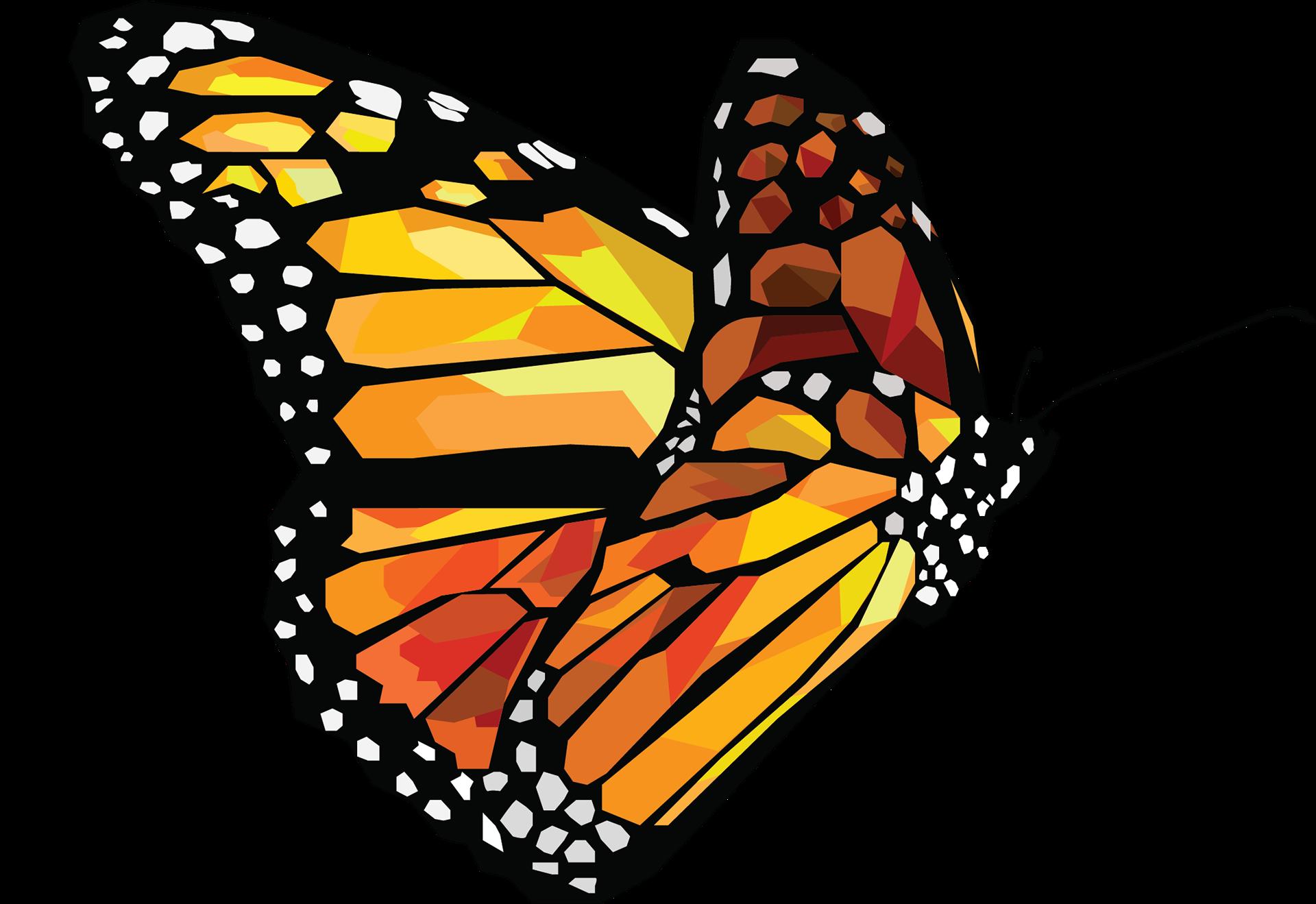 Butterfly vector png. Jamie rosado