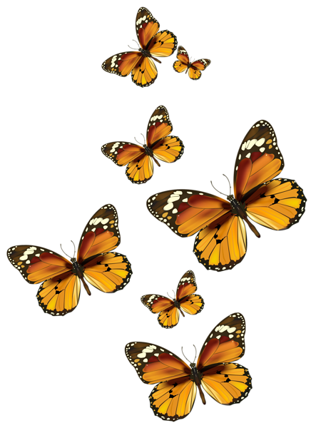 Butterfly vector png. Butterflies clipart picture digital