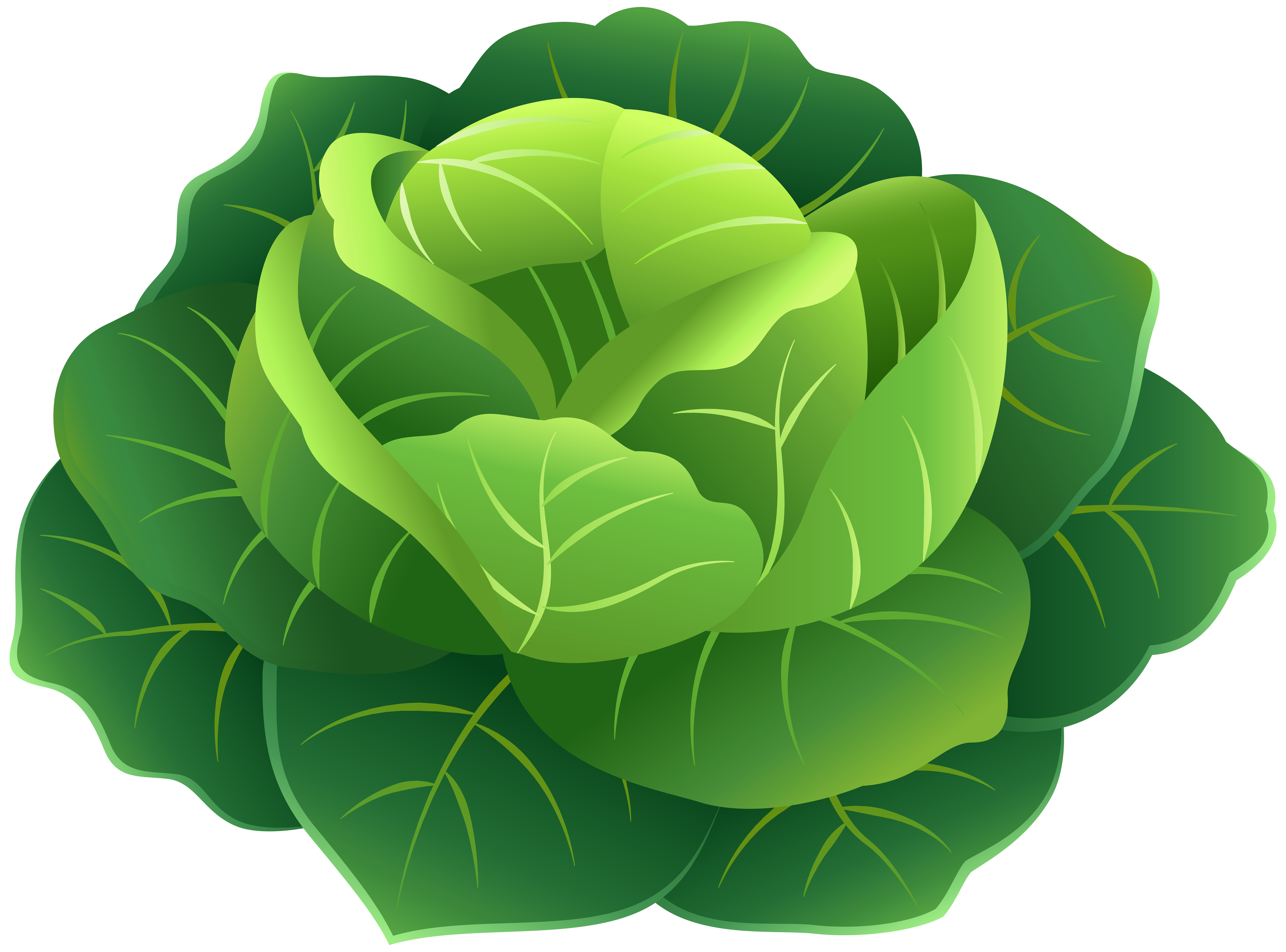 Png clip art image. Cabbage clipart