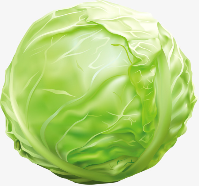 Green hand painted animation. Cabbage clipart animated